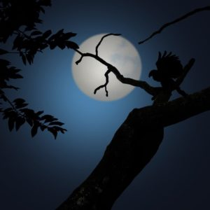 The Nocturnal Song